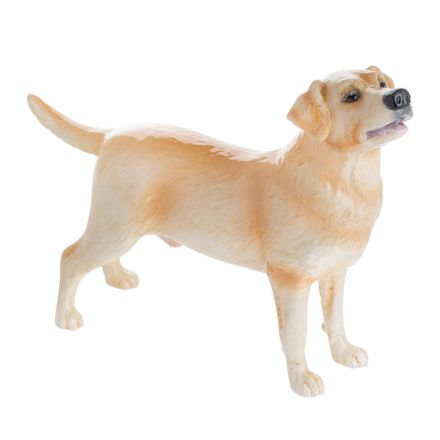 Labrador (Yellow)