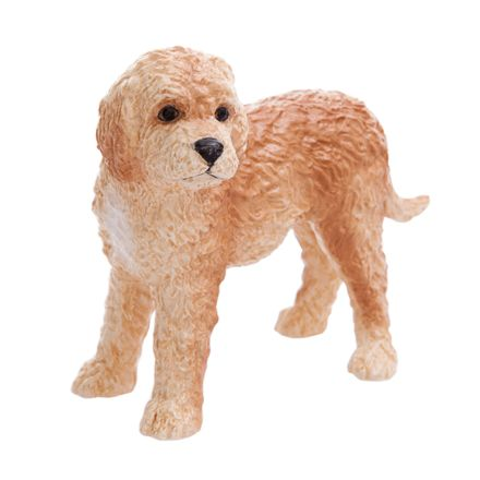 Cream Cockapoo