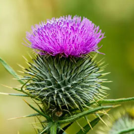 Thistle Themed Gifts